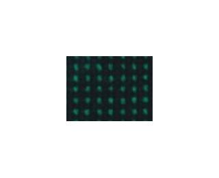 Stolička bez operadla Chico - chróm / zelená látka (C32)